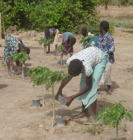 short note on tree plantation